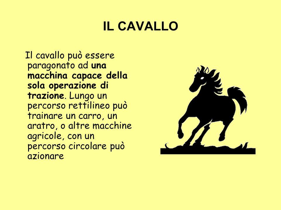 IL CAVALLO Il cavallo può essere paragonato ad una macchina capace della sola operazione di trazione. Lungo un percorso rettilineo può trainare un car