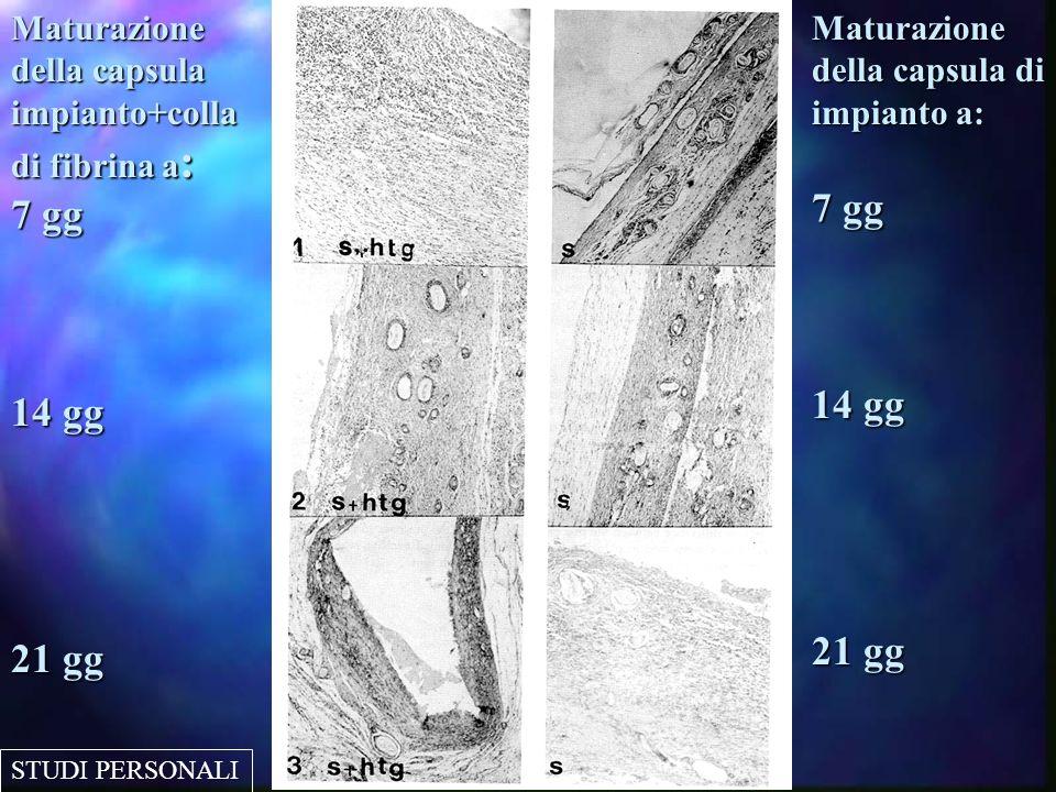 MONTECATINI 2005-XXIV NAZIONALE A.C.O.I.Capsula con utilizzo di colla di fibrina al M.O.