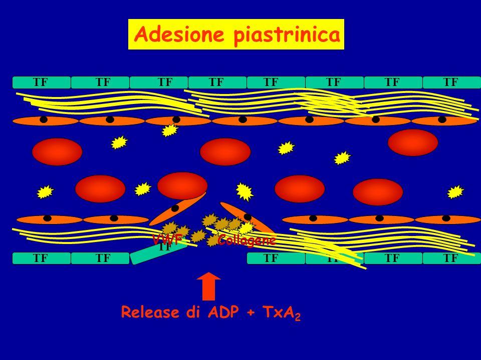 TF VWF Collagene Release di ADP + TxA 2 Adesione piastrinica