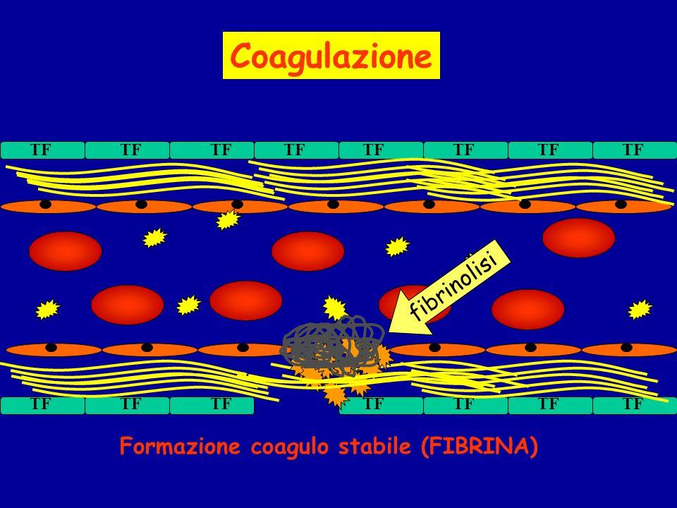 Formazione coagulo stabile (FIBRINA) Coagulazione fibrinolisi