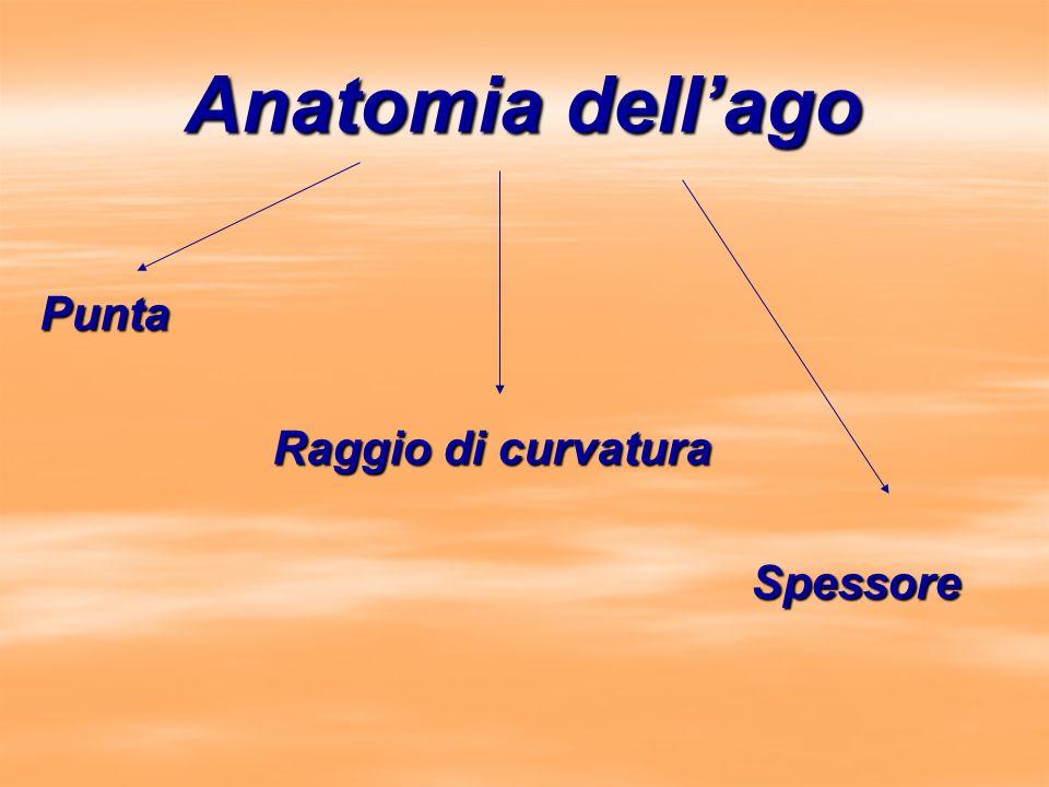 Anatomia dellago Punta Raggio di curvatura Raggio di curvatura Spessore Spessore
