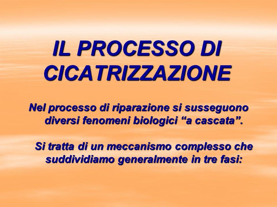 IL PROCESSO DI CICATRIZZAZIONE Nel processo di riparazione si susseguono diversi fenomeni biologici a cascata. Si tratta di un meccanismo complesso ch