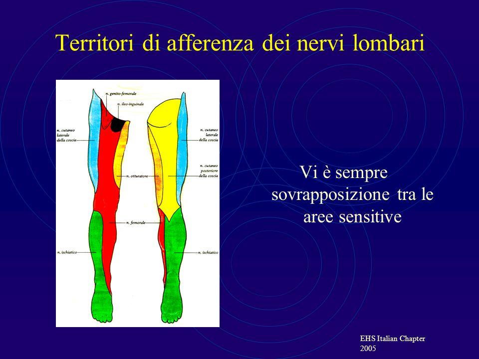 Territori di afferenza dei nervi lombari Vi è sempre sovrapposizione tra le aree sensitive