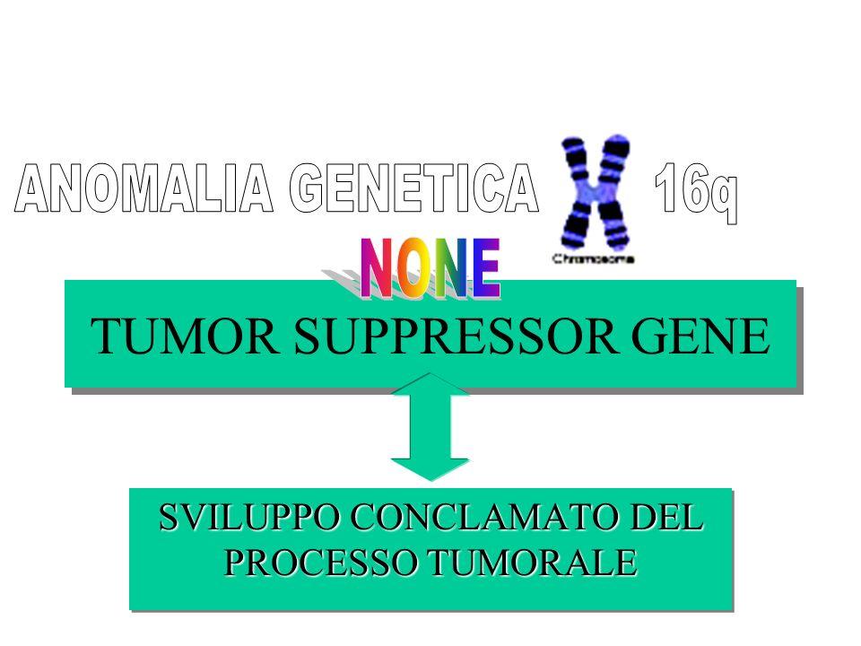TUMOR SUPPRESSOR GENE SVILUPPO CONCLAMATO DEL PROCESSO TUMORALE