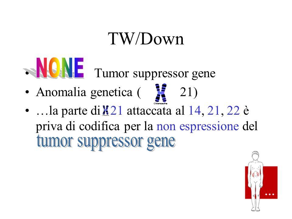 TW/Down Tumor suppressor gene Anomalia genetica ( 21) …la parte di 21 attaccata al 14, 21, 22 è priva di codifica per la non espressione del
