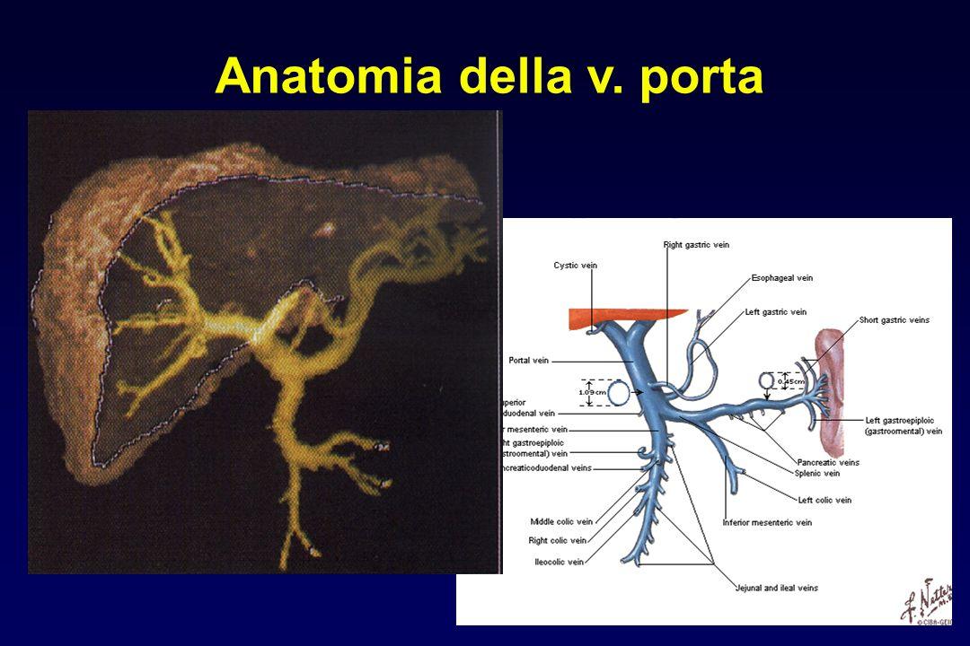 Anatomia della v. porta