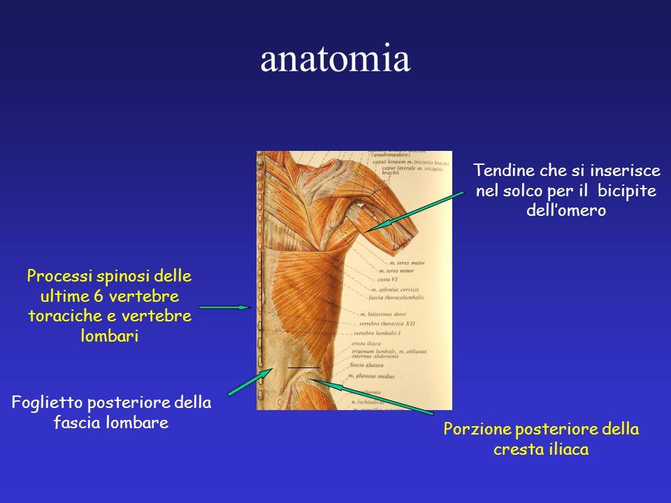 anatomia Processi spinosi delle ultime 6 vertebre toraciche e vertebre lombari Foglietto posteriore della fascia lombare Porzione posteriore della cre