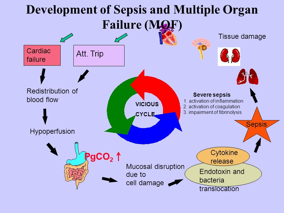 Cardiac failure Redistribution of blood flow Hypoperfusion Endotoxin and bacteria translocation VICIOUS CYCLE Sepsis PgCO 2 Development of Sepsis and