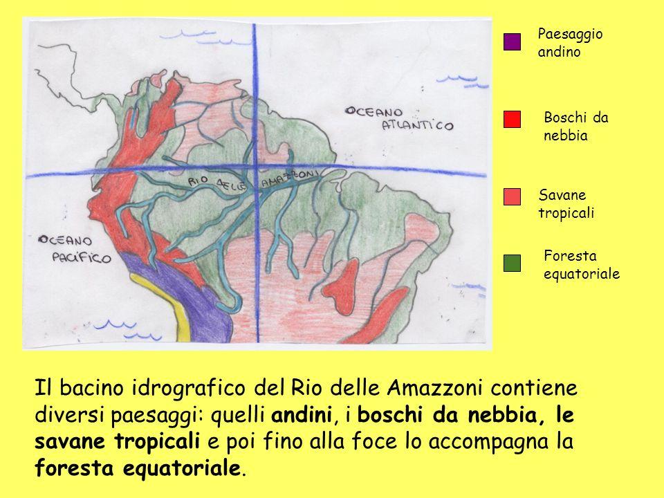 Il bacino idrografico del Rio delle Amazzoni contiene diversi paesaggi: quelli andini, i boschi da nebbia, le savane tropicali e poi fino alla foce lo accompagna la foresta equatoriale.