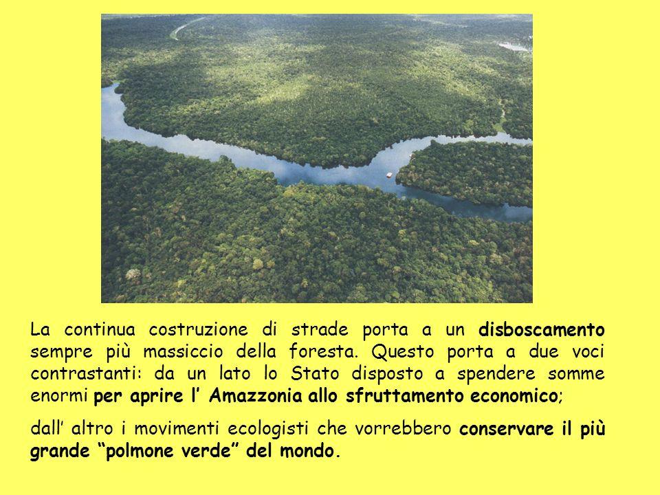 La continua costruzione di strade porta a un disboscamento sempre più massiccio della foresta.