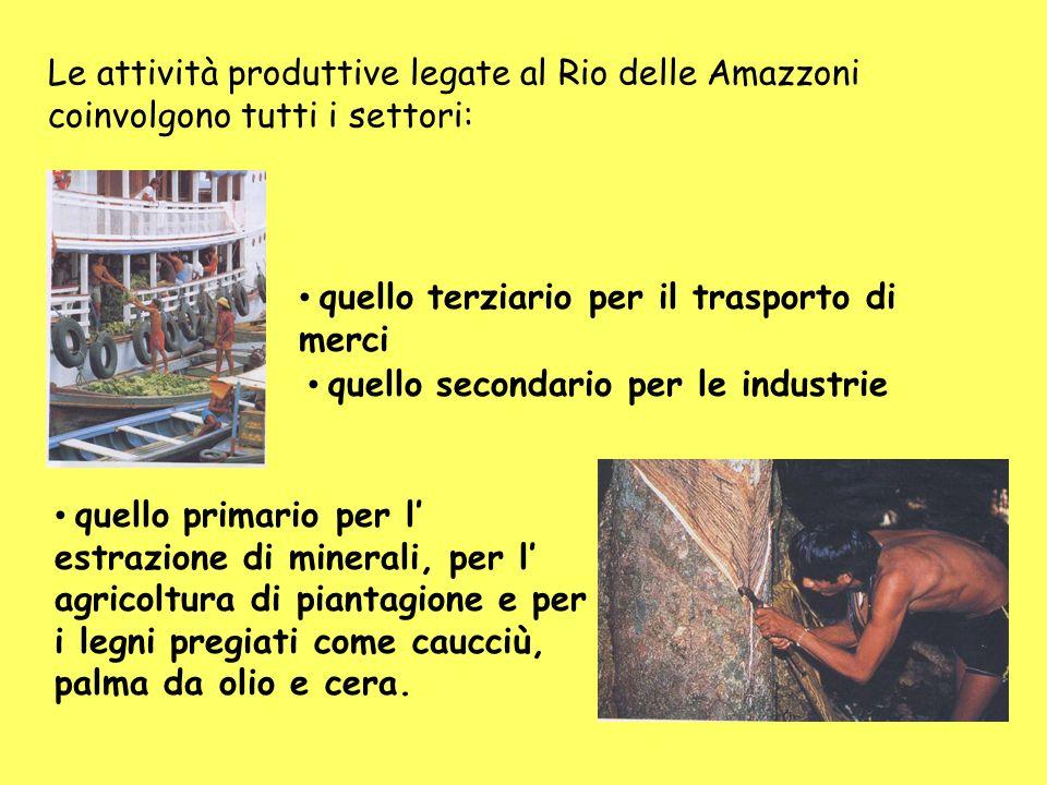 Le attività produttive legate al Rio delle Amazzoni coinvolgono tutti i settori: quello terziario per il trasporto di merci quello secondario per le industrie quello primario per l estrazione di minerali, per l agricoltura di piantagione e per i legni pregiati come caucciù, palma da olio e cera.