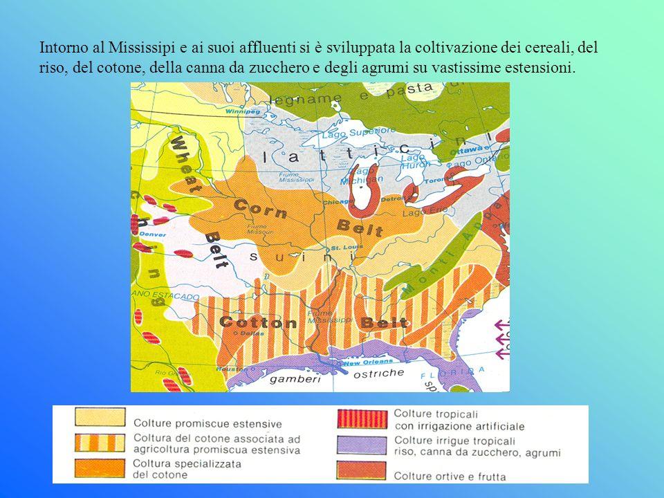 Intorno al Mississipi e ai suoi affluenti si è sviluppata la coltivazione dei cereali, del riso, del cotone, della canna da zucchero e degli agrumi su