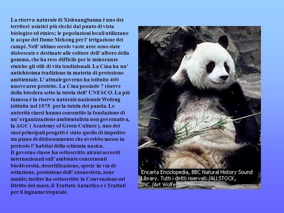 La riserva naturale di Xishuangbanna è uno dei territori asiatici più ricchi dal punto di vista biologico ed etnico; le popolazioni locali utilizzano