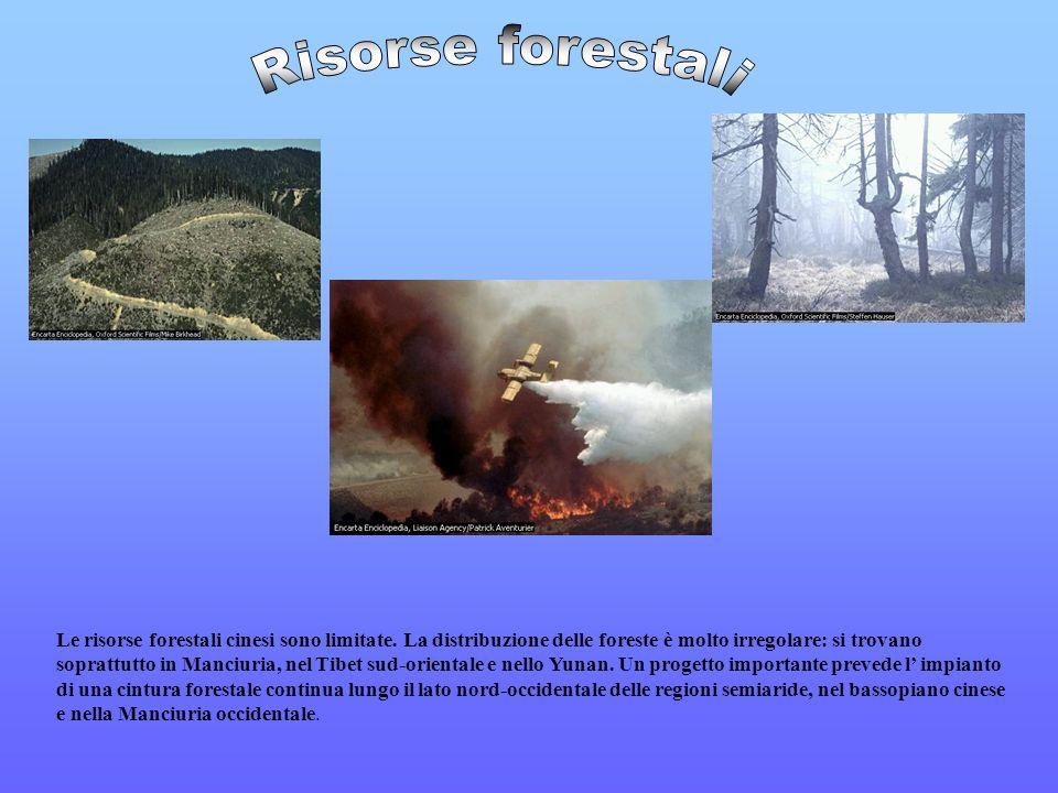 Le risorse forestali cinesi sono limitate. La distribuzione delle foreste è molto irregolare: si trovano soprattutto in Manciuria, nel Tibet sud-orien