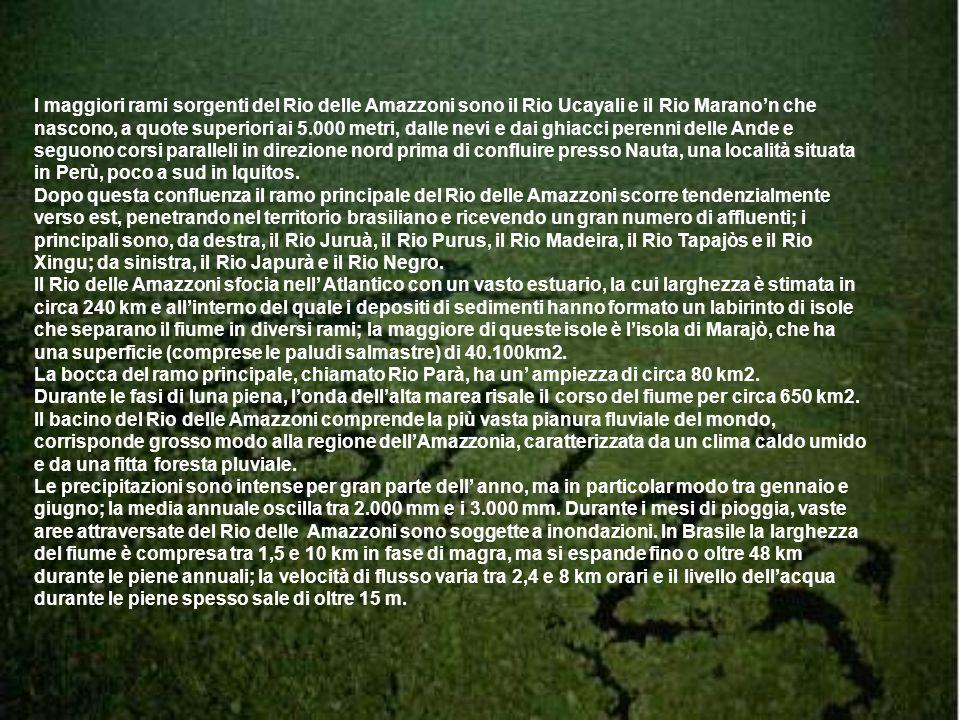 I maggiori rami sorgenti del Rio delle Amazzoni sono il Rio Ucayali e il Rio Maranon che nascono, a quote superiori ai 5.000 metri, dalle nevi e dai g