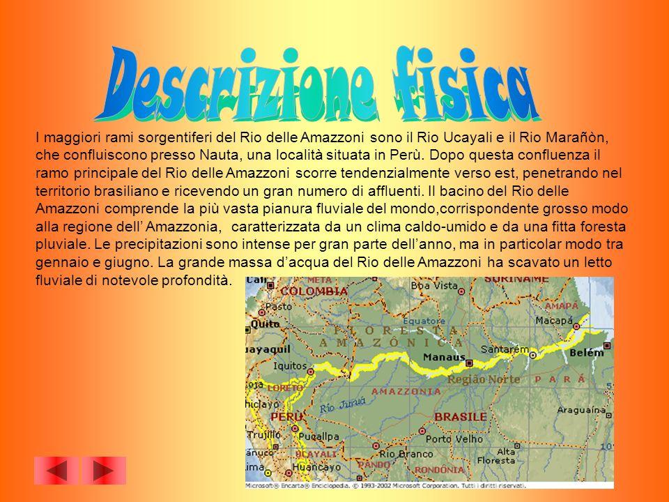 I maggiori rami sorgentiferi del Rio delle Amazzoni sono il Rio Ucayali e il Rio Marañòn, che confluiscono presso Nauta, una località situata in Perù.