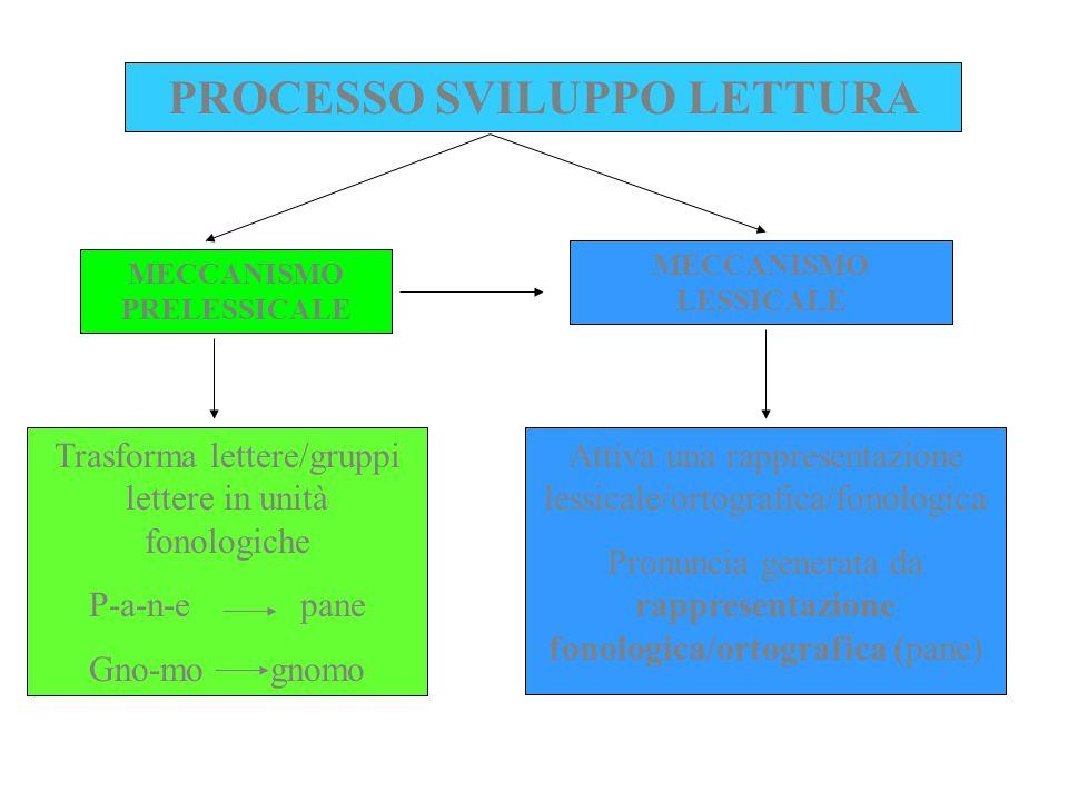 PROCESSO SVILUPPO LETTURA MECCANISMO PRELESSICALE MECCANISMO LESSICALE Trasforma lettere/gruppi lettere in unità fonologiche P-a-n-e pane Gno-mo gnomo