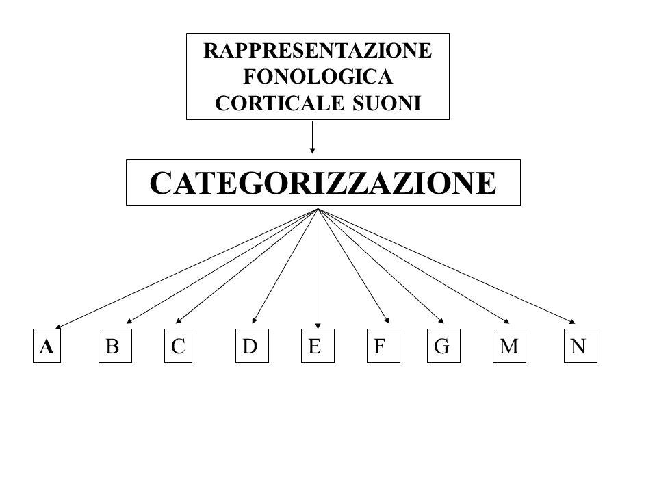 RAPPRESENTAZIONE FONOLOGICA CORTICALE SUONI CATEGORIZZAZIONE BACDEFGNM