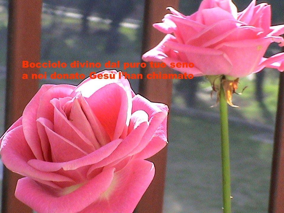 Bocciolo divino dal puro tuo seno a noi donato Gesù lhan chiamato