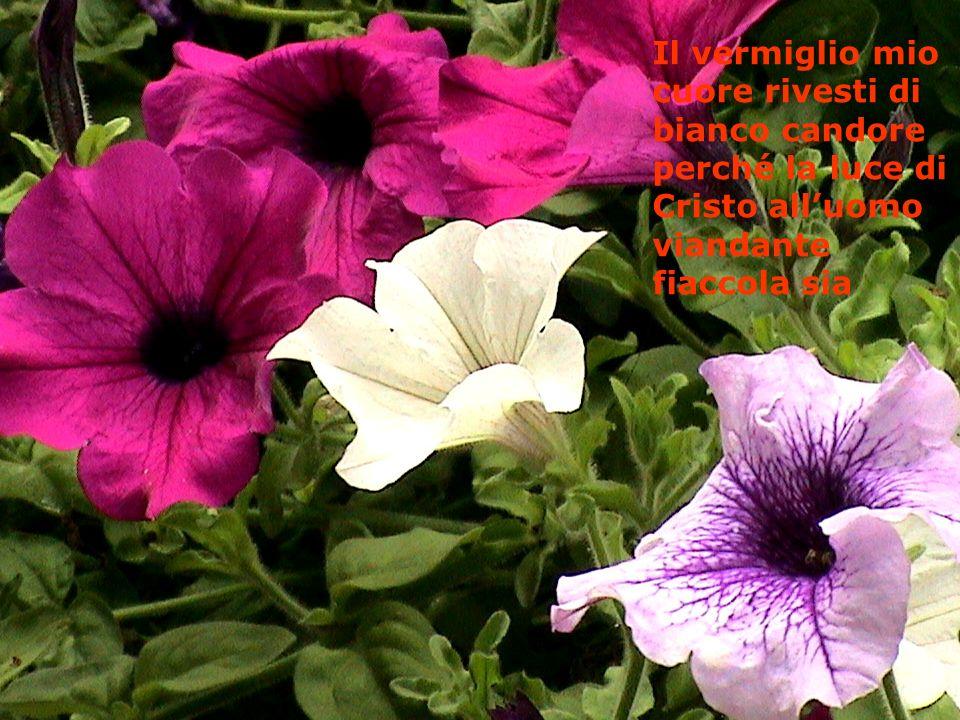 Il vermiglio mio cuore rivesti di bianco candore perché la luce di Cristo alluomo viandante fiaccola sia