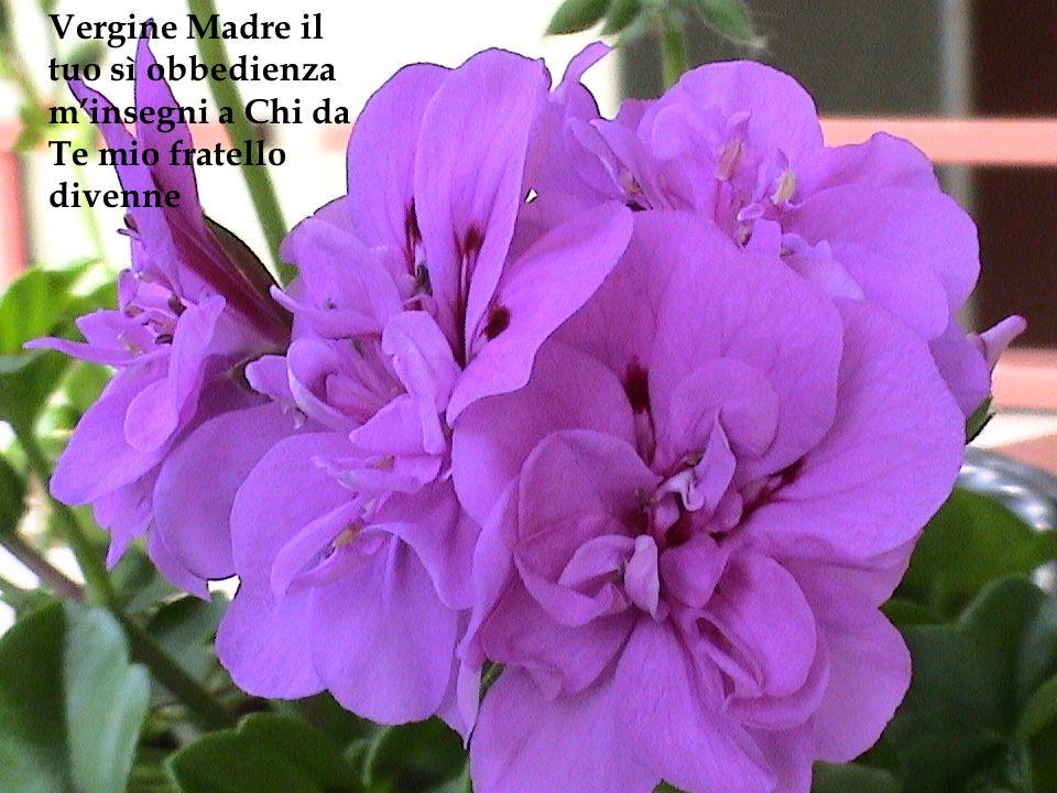 Un vaso di fiori olezzanti questo mio cuore diventi nellattesa del tuo splendore