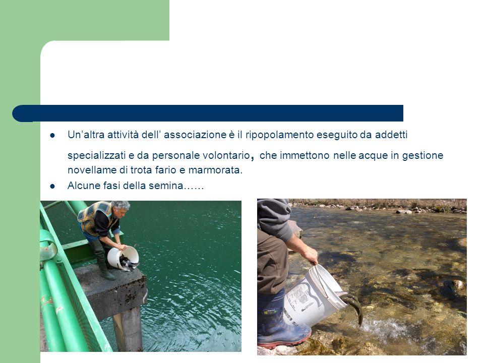 Unaltra attività dell associazione è il ripopolamento eseguito da addetti specializzati e da personale volontario, che immettono nelle acque in gestio