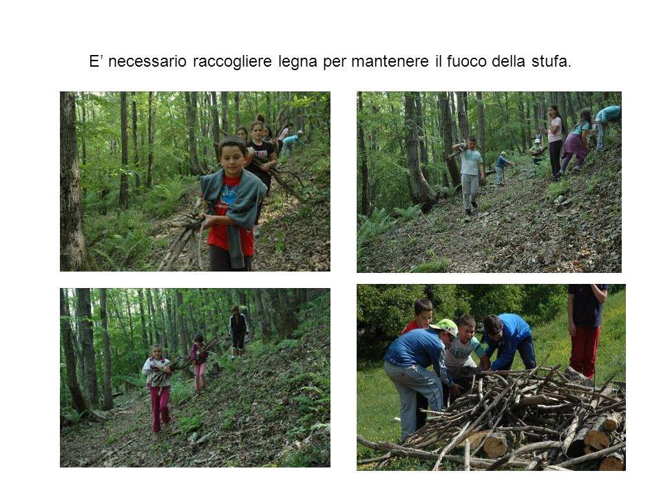 E necessario raccogliere legna per mantenere il fuoco della stufa.