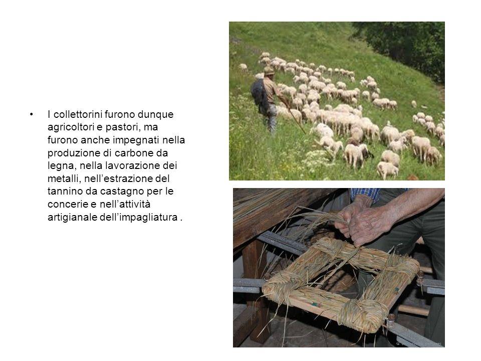 I collettorini furono dunque agricoltori e pastori, ma furono anche impegnati nella produzione di carbone da legna, nella lavorazione dei metalli, nel