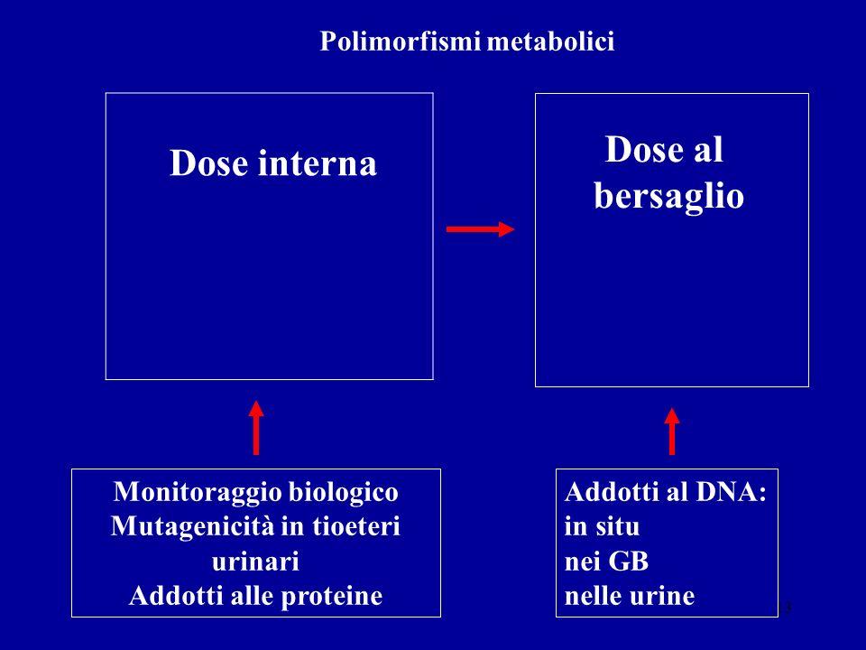 13 Dose al bersaglio Polimorfismi metabolici Monitoraggio biologico Mutagenicità in tioeteri urinari Addotti alle proteine Dose interna Addotti al DNA