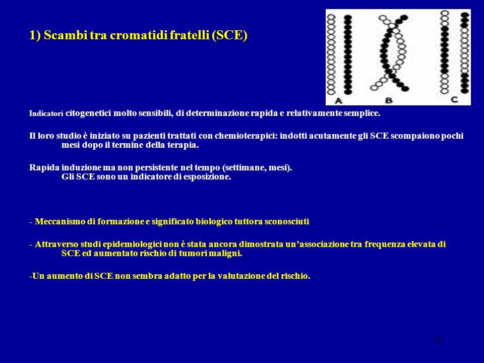 20 1) Scambi tra cromatidi fratelli (SCE) Indicatori citogenetici molto sensibili, di determinazione rapida e relativamente semplice. Il loro studio è