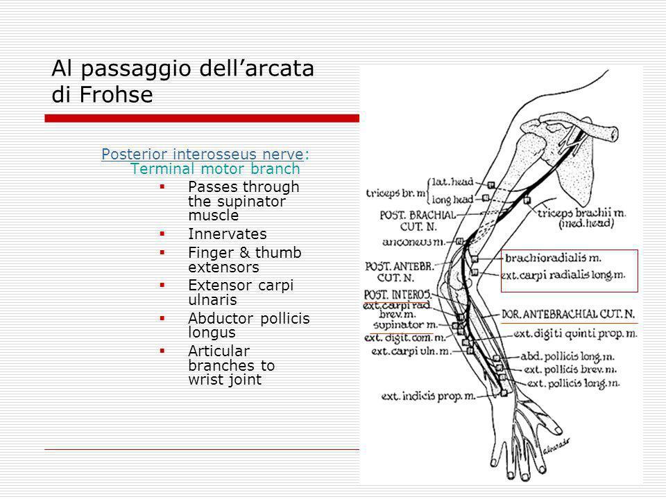Posterior interosseus nervePosterior interosseus nerve: Terminal motor branch Passes through the supinator muscle Innervates Finger & thumb extensors