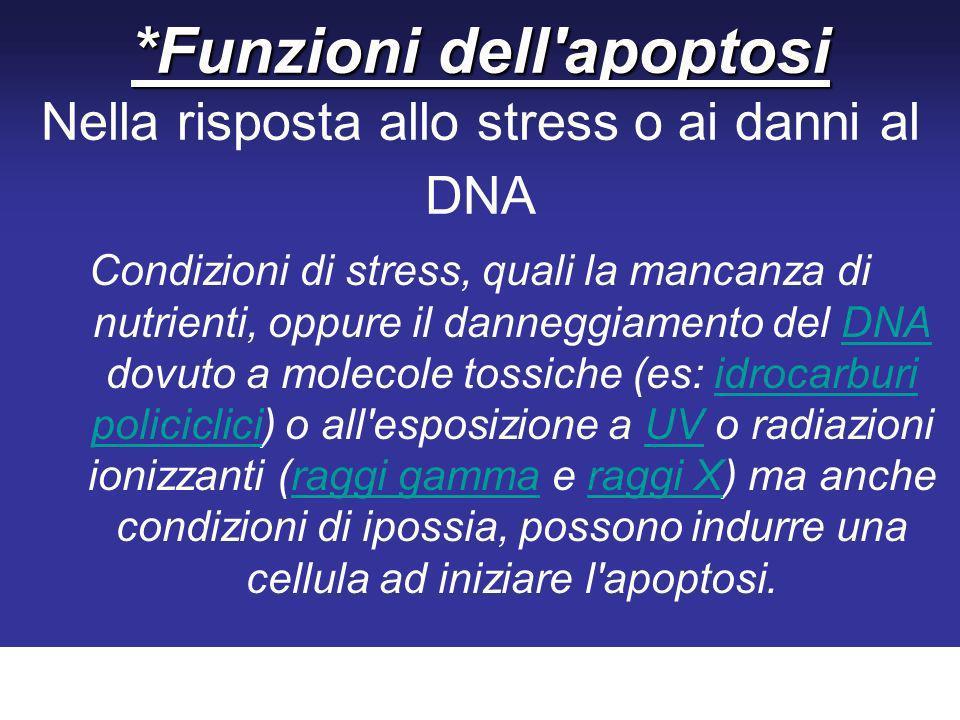 *Funzioni dell apoptosi *Funzioni dell apoptosi Nella risposta allo stress o ai danni al DNA Condizioni di stress, quali la mancanza di nutrienti, oppure il danneggiamento del DNA dovuto a molecole tossiche (es: idrocarburi policiclici) o all esposizione a UV o radiazioni ionizzanti (raggi gamma e raggi X) ma anche condizioni di ipossia, possono indurre una cellula ad iniziare l apoptosi.DNAidrocarburi policicliciUVraggi gammaraggi X