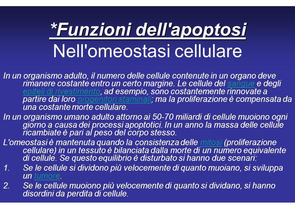 *Funzioni dell apoptosi *Funzioni dell apoptosi Nell omeostasi cellulare In un organismo adulto, il numero delle cellule contenute in un organo deve rimanere costante entro un certo margine.
