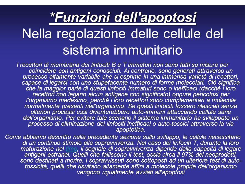 *Funzioni dell apoptosi *Funzioni dell apoptosi Nella regolazione delle cellule del sistema immunitario I recettori di membrana dei linfociti B e T immaturi non sono fatti su misura per coincidere con antigeni conosciuti.