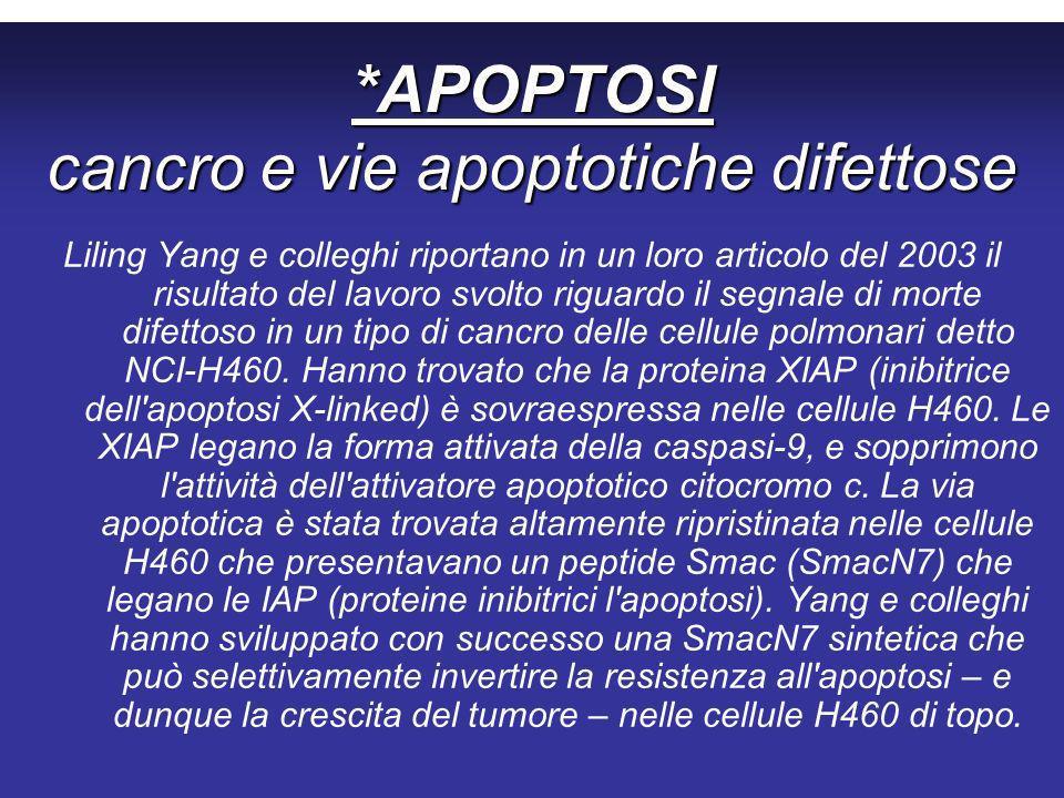 *APOPTOSI cancro e vie apoptotiche difettose Liling Yang e colleghi riportano in un loro articolo del 2003 il risultato del lavoro svolto riguardo il segnale di morte difettoso in un tipo di cancro delle cellule polmonari detto NCI-H460.