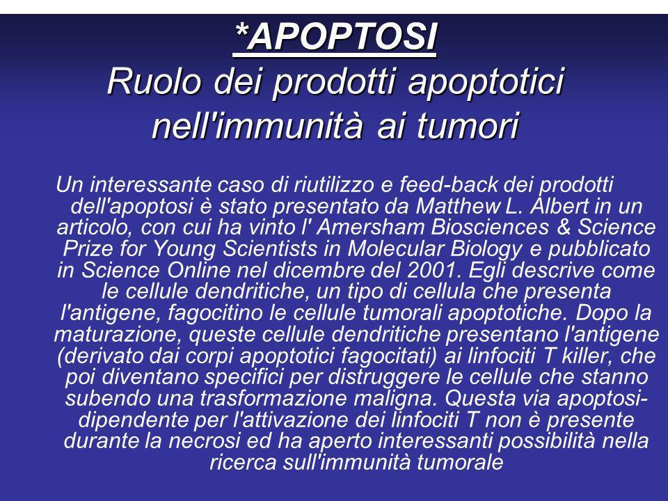 *APOPTOSI Ruolo dei prodotti apoptotici nell immunità ai tumori Un interessante caso di riutilizzo e feed-back dei prodotti dell apoptosi è stato presentato da Matthew L.