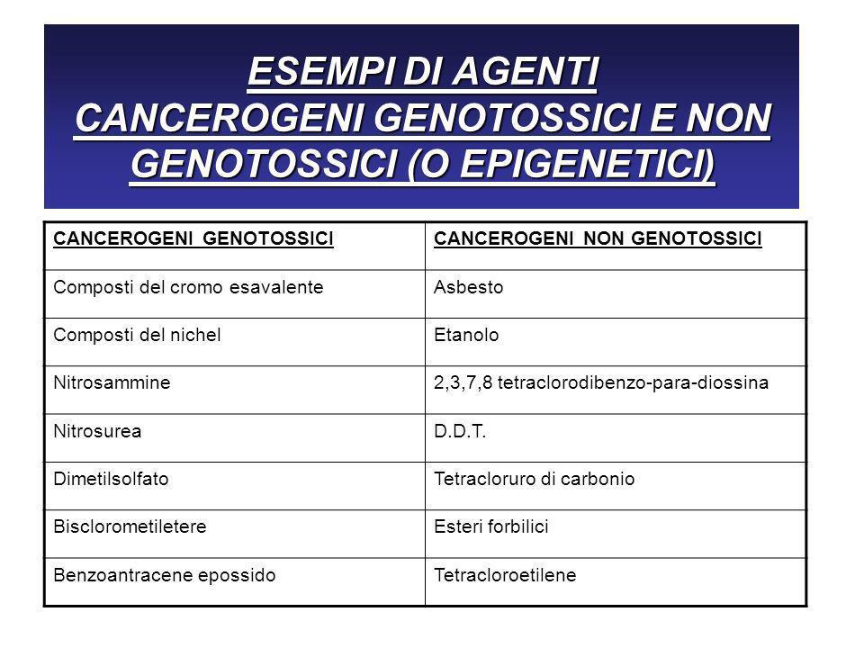 ESEMPI DI AGENTI CANCEROGENI GENOTOSSICI E NON GENOTOSSICI (O EPIGENETICI) CANCEROGENI GENOTOSSICICANCEROGENI NON GENOTOSSICI Composti del cromo esavalenteAsbesto Composti del nichelEtanolo Nitrosammine2,3,7,8 tetraclorodibenzo-para-diossina NitrosureaD.D.T.