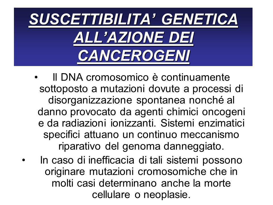 SUSCETTIBILITA GENETICA ALLAZIONE DEI CANCEROGENI Il DNA cromosomico è continuamente sottoposto a mutazioni dovute a processi di disorganizzazione spontanea nonché al danno provocato da agenti chimici oncogeni e da radiazioni ionizzanti.