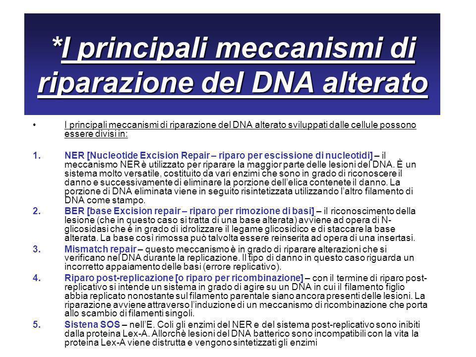 *I principali meccanismi di riparazione del DNA alterato I principali meccanismi di riparazione del DNA alterato sviluppati dalle cellule possono essere divisi in: 1.NER [Nucleotide Excision Repair – riparo per escissione di nucleotidi] – il meccanismo NER è utilizzato per riparare la maggior parte delle lesioni del DNA.