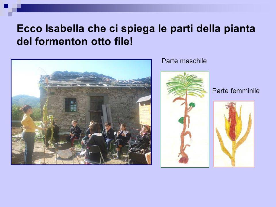 Ecco Isabella che ci spiega le parti della pianta del formenton otto file.