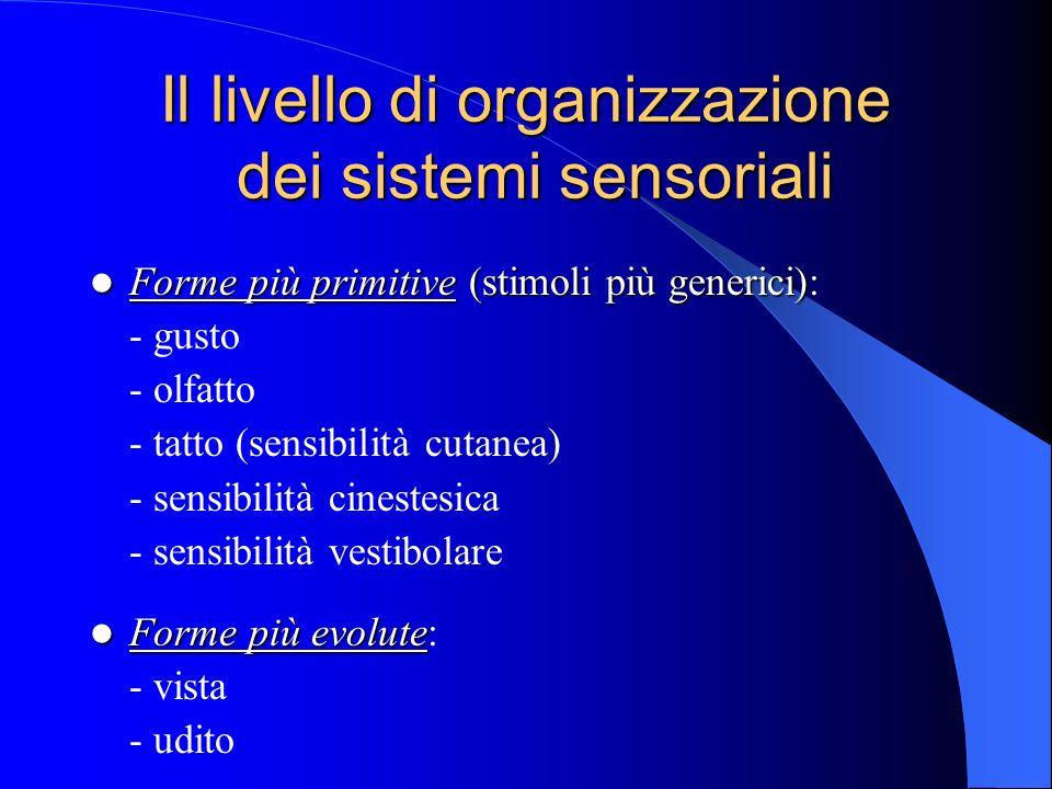 Il livello di organizzazione dei sistemi sensoriali Forme più primitive (stimoli più generici) Forme più primitive (stimoli più generici): - gusto - olfatto - tatto (sensibilità cutanea) - sensibilità cinestesica - sensibilità vestibolare Forme più evolute Forme più evolute: - vista - udito
