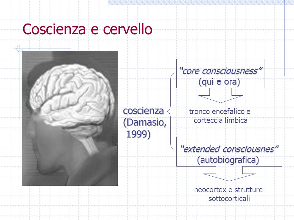 Coscienza e cervello core consciousness (qui e ora) extended consciousnes (autobiografica) coscienza(Damasio, 1999) 1999) neocortex e strutture sottoc