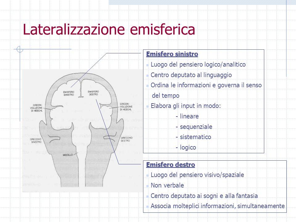 Lateralizzazione emisferica Emisfero sinistro Luogo del pensiero logico/analitico Centro deputato al linguaggio Ordina le informazioni e governa il se