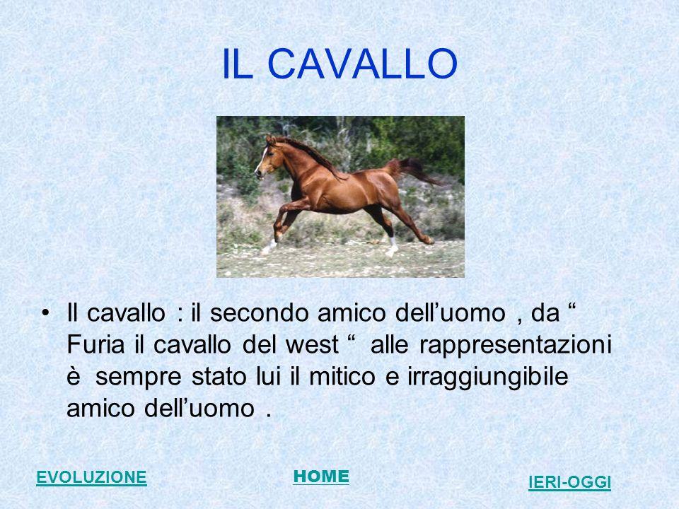 IL CAVALLO Il cavallo : il secondo amico delluomo, da Furia il cavallo del west alle rappresentazioni è sempre stato lui il mitico e irraggiungibile amico delluomo.