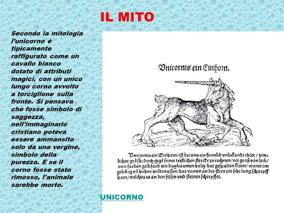 IL MITO Secondo la mitologia lunicorno è tipicamente raffigurato come un cavallo bianco dotato di attributi magici, con un unico lungo corno avvolto a torciglione sulla fronte.