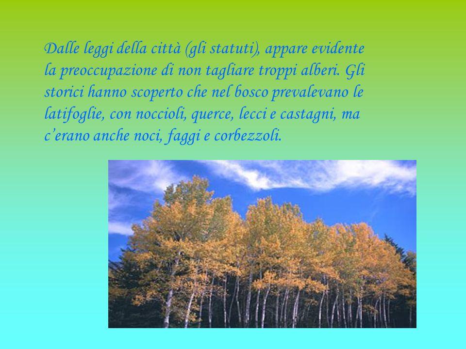 Nel Medioevo i boschi e i pascoli di S.