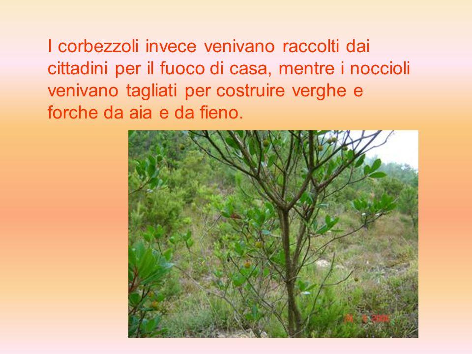 I castagni venivano usati soprattutto per lalimentazione, mentre le querce erano utilizzate per il legname da costruzione.