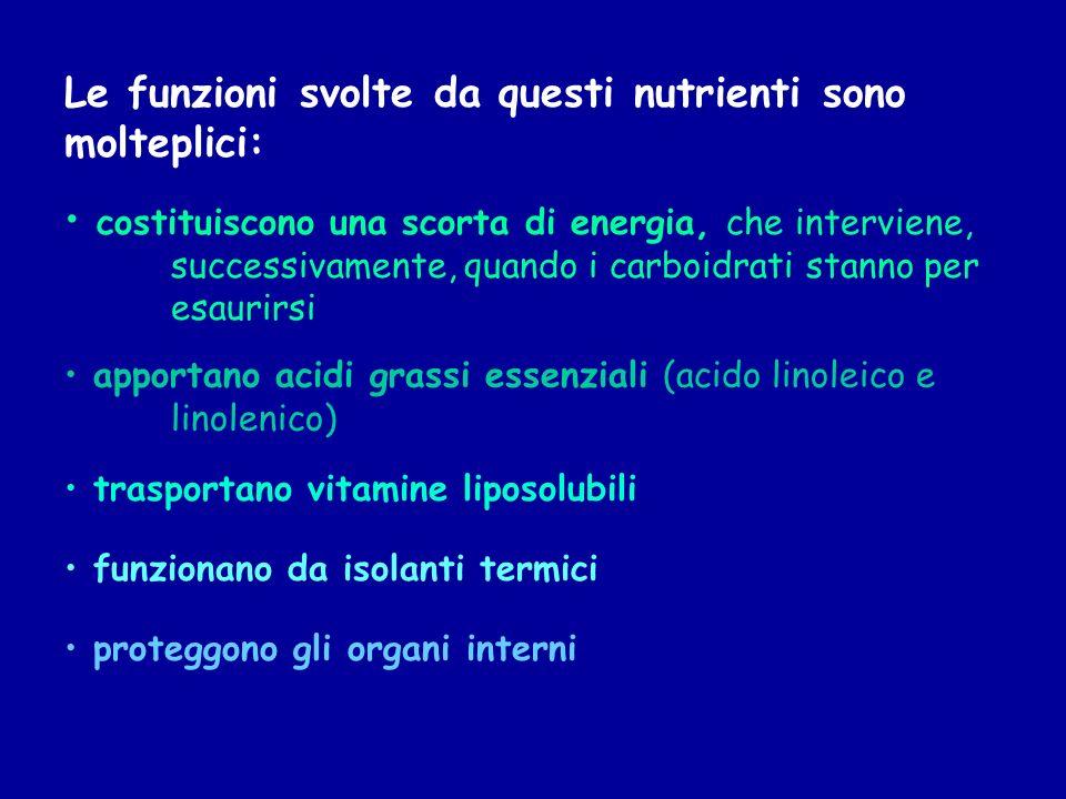 Le funzioni svolte da questi nutrienti sono molteplici: costituiscono una scorta di energia, che interviene, successivamente, quando i carboidrati sta