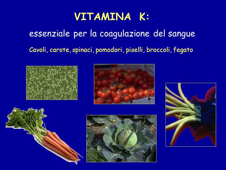 VITAMINA K: essenziale per la coagulazione del sangue Cavoli, carote, spinaci, pomodori, piselli, broccoli, fegato