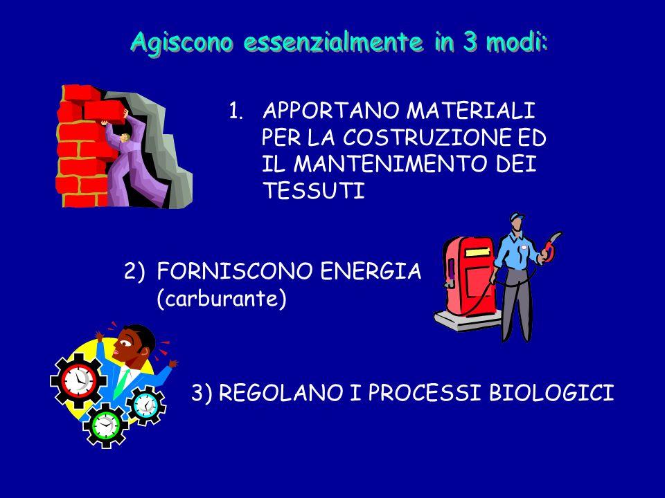 3) REGOLANO I PROCESSI BIOLOGICI Agiscono essenzialmente in 3 modi: 1.APPORTANO MATERIALI PER LA COSTRUZIONE ED IL MANTENIMENTO DEI TESSUTI 2)FORNISCO